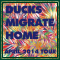 Ducks Migrate Home April 2014 Tour